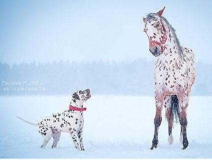 У них разные породы, но это не мешает им быть настолько похожими)))