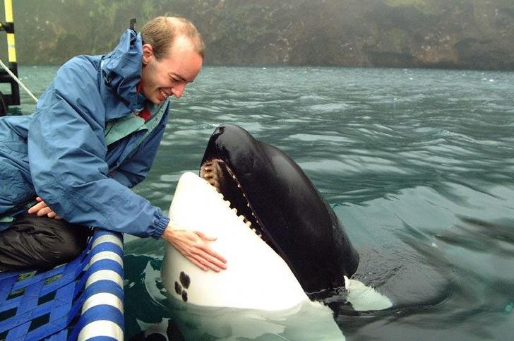 История легендарной косатки, которая спустя годы жизни в неволе вернулась в океан