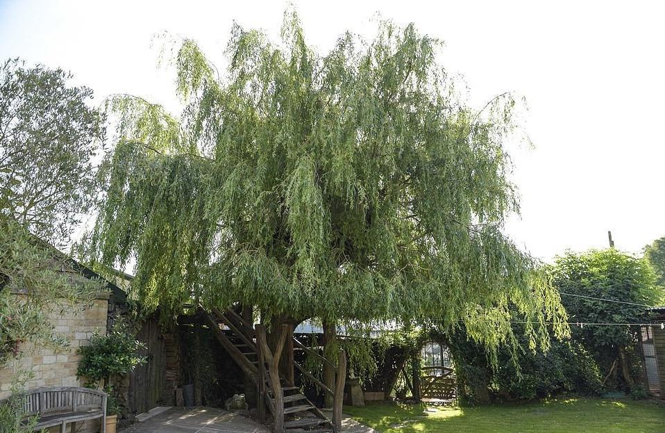 Мужчина построил такой домик на дереве, что ему позавидует каждый (фото)