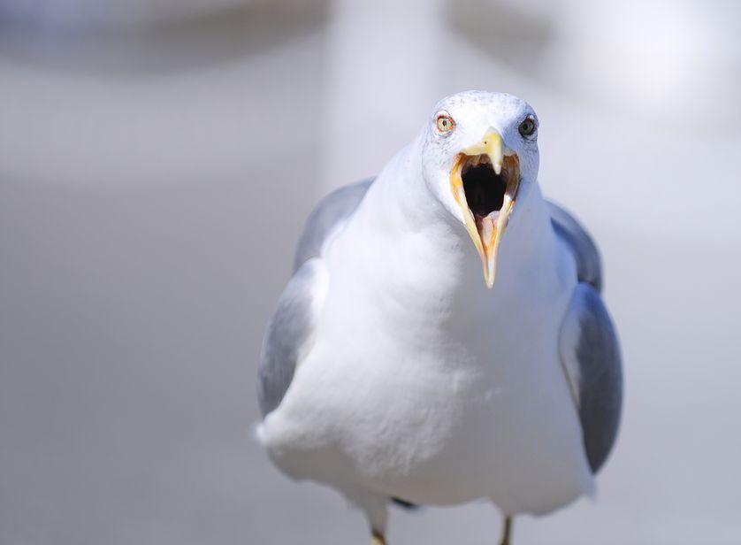 Птенцы общаются друг с другом ещё до того, как вылупятся. Исследование