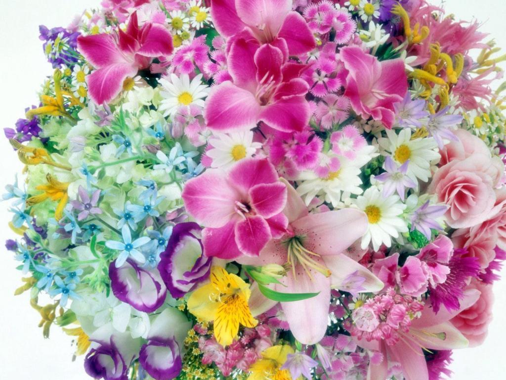 тем красивейшие цветы мира открытки дуже міцного