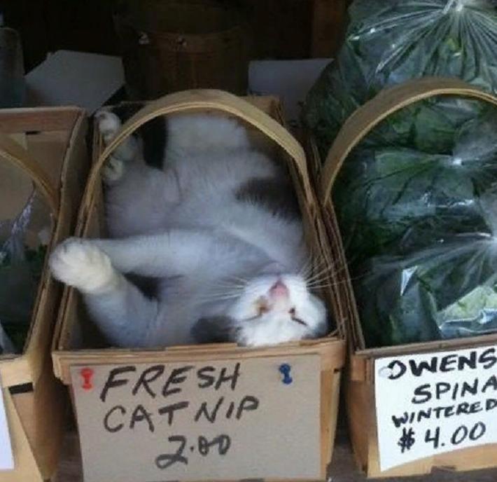 Кошки действительно нас любят, а не притворяются: к такому выводу пришли исследователи