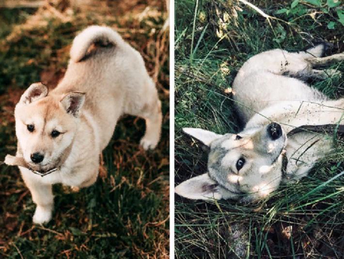 Как быстро они растут: фото, которые демонстрируют, как быстро вырастают наши любимые питомцы