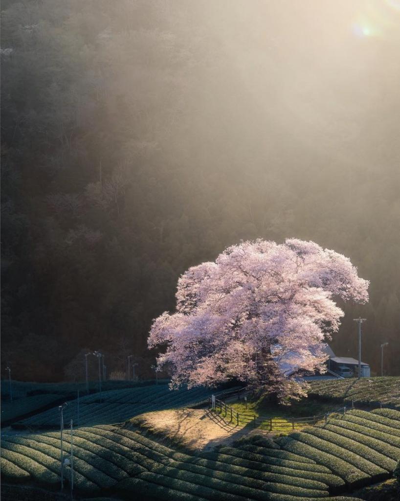 Волшебная Япония: городские и природные пейзажи глазами фотографа-путешественника