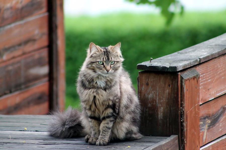 Почему кошка ждет нас у двери, когда мы возвращаемся домой