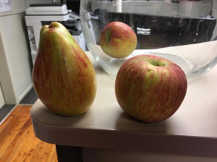 На эти фрукты придется посмотреть еще раз, потому что вы не поверите своим глазам