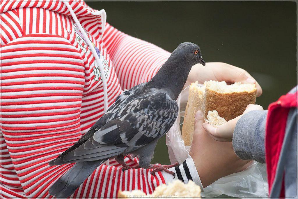 занимался покормить птицу картинка умолчанию браузеры