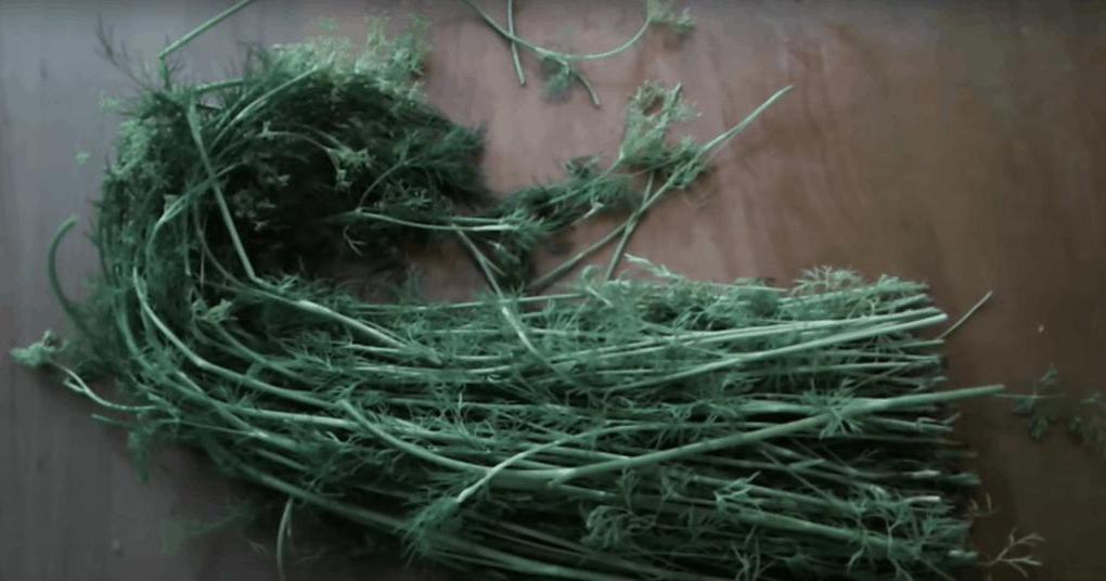 Бабушка еще в детстве научила меня не выбрасывать стебли укропа. Из них всегда можно приготовить что-то вкусненькое
