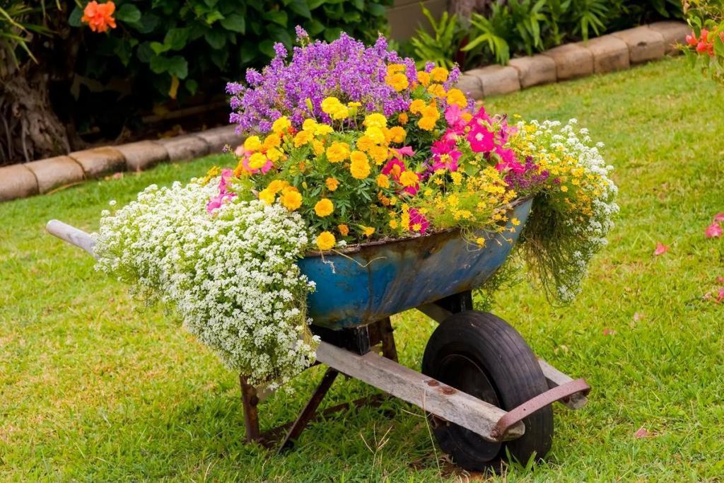 наличии картинки цветников в саду своими руками знаете