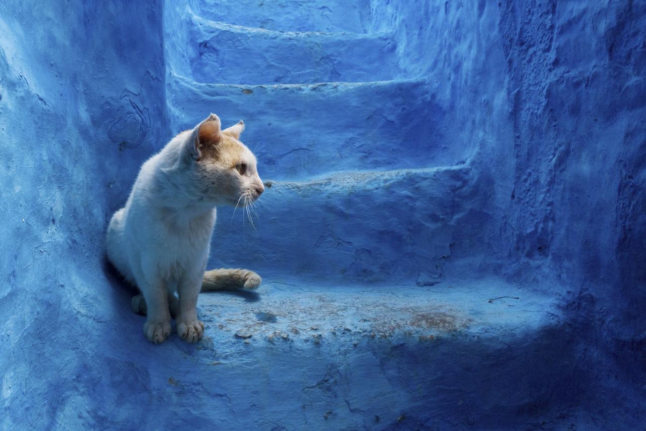 На севере Марокко есть самый синий город в мире. Вот фото