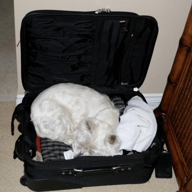 Милейшая фотоподборка спящих собачек, которые уснули не в лежаках)))