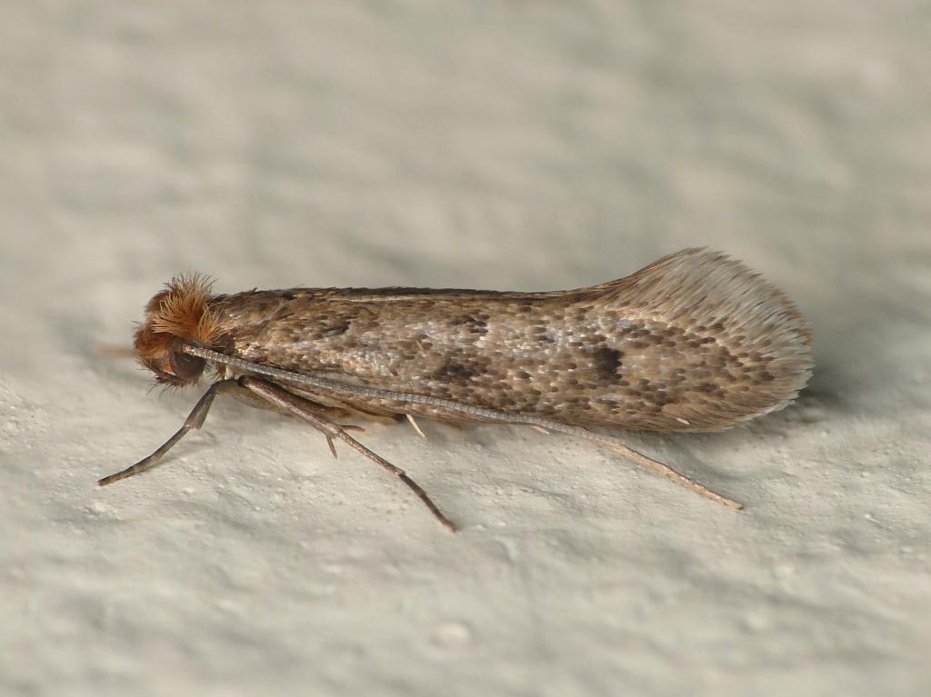 Моль не появляется в моем доме: делюсь своими методами борьбы с насекомыми