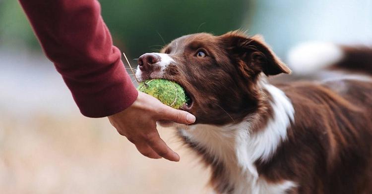 Дрессировщик перечислил признаки, по которым можно понять, умная у вас собака или нет