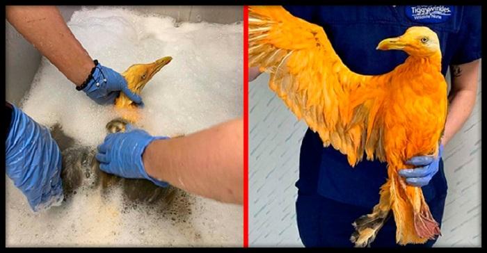 Ветеринару принесли экзотическую птицу. Но правда оказалась весьма неожиданной - это была чайка