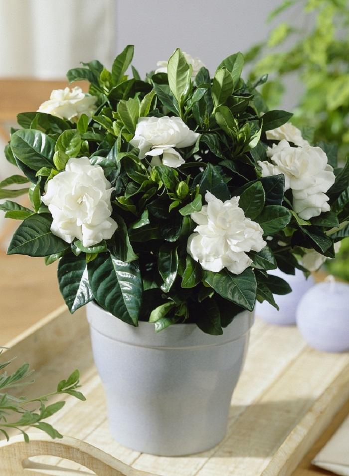 Мучает бессонница - пора завести в доме цветы: лучшие комнатные растения для спокойного сна