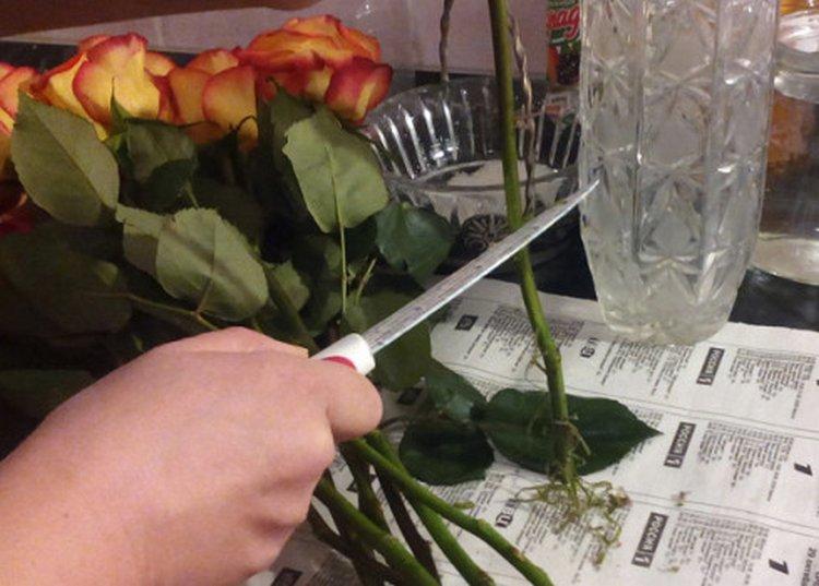 Уход за букетом из роз, букеты роз заказать