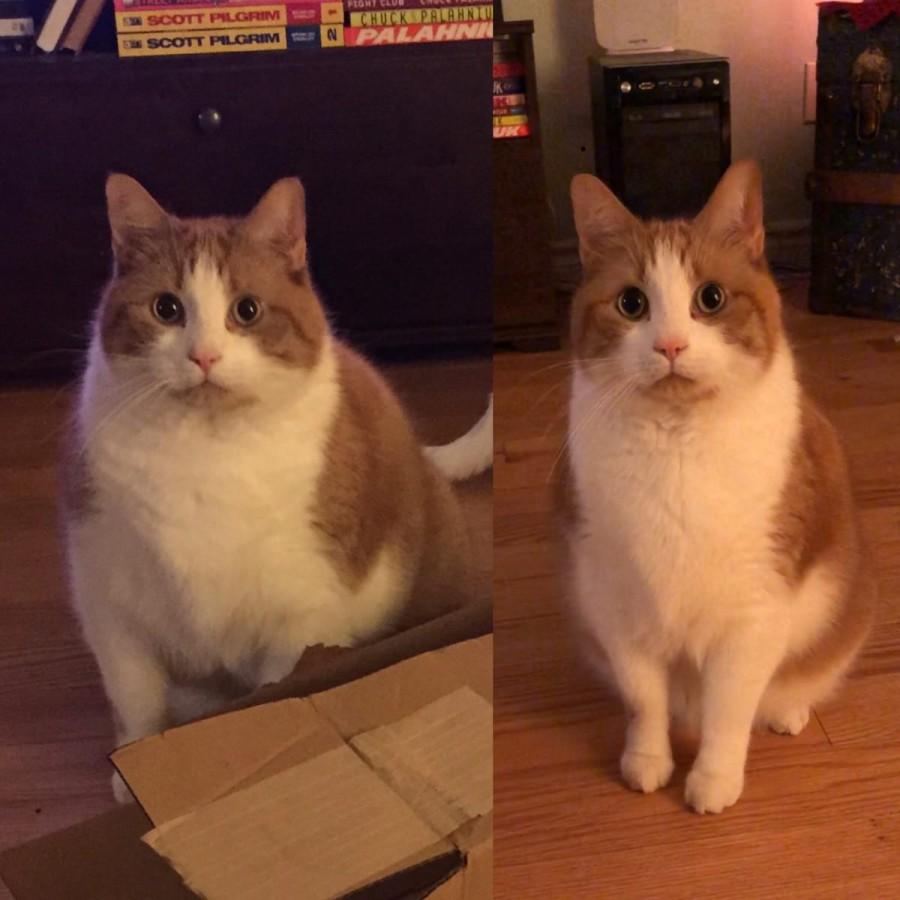 Кошка Не Может Похудеть. Основные способы — как помочь похудеть кошке