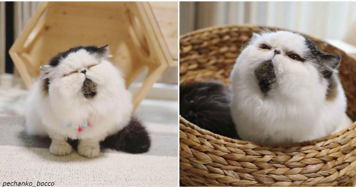 Знакомьтесь: кот Зуу, чье лицо покорит каждое сердце