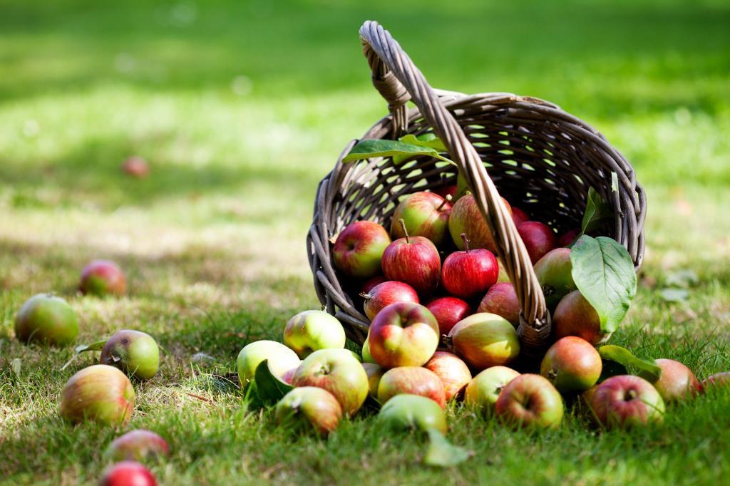 После Яблочного Спаса: как сохранить урожай свежим надолго