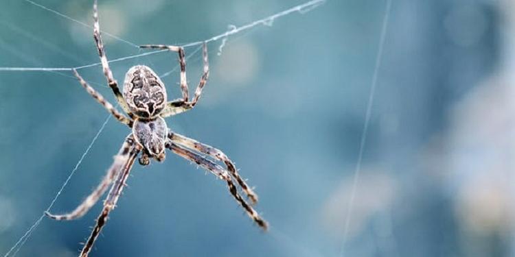 Энтомологи согласны с тем, что убивать пауков в доме нельзя