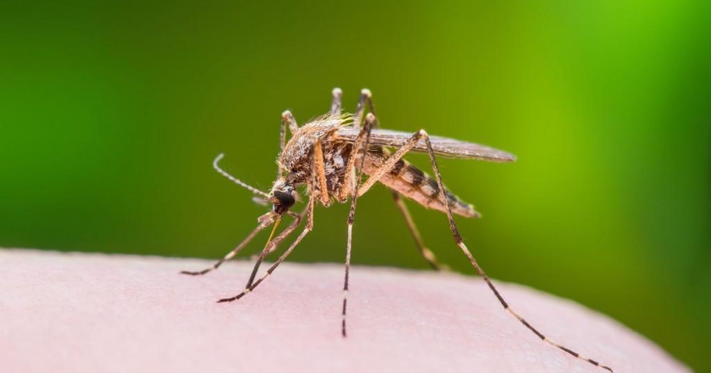 Среди насекомых тоже есть гурманы: ученые выяснили, какая кровь больше всего привлекает комаров