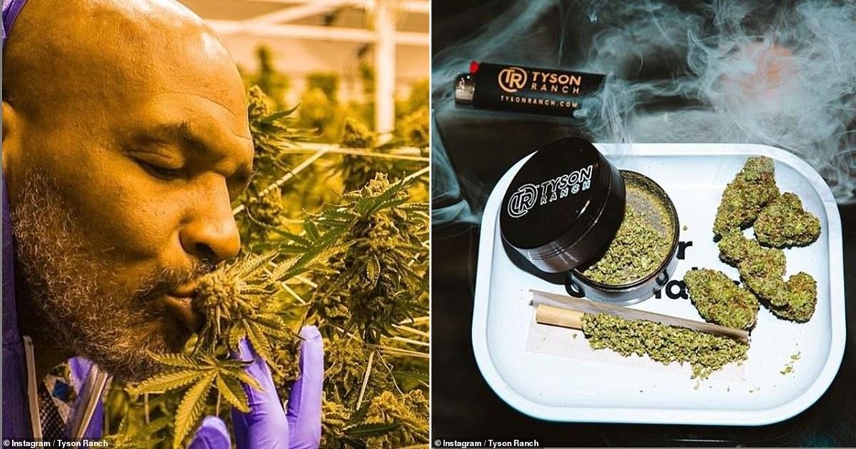 Майк Тайсон рассказал, что курит на своем ранчо «травку» на  40 тысяч долларов в месяц