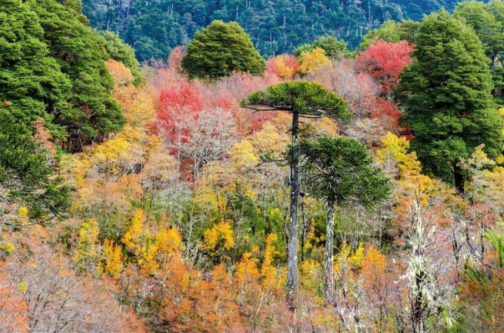 10 самых красивых лесов в мире, по данным National Geographic: многовековые красоты