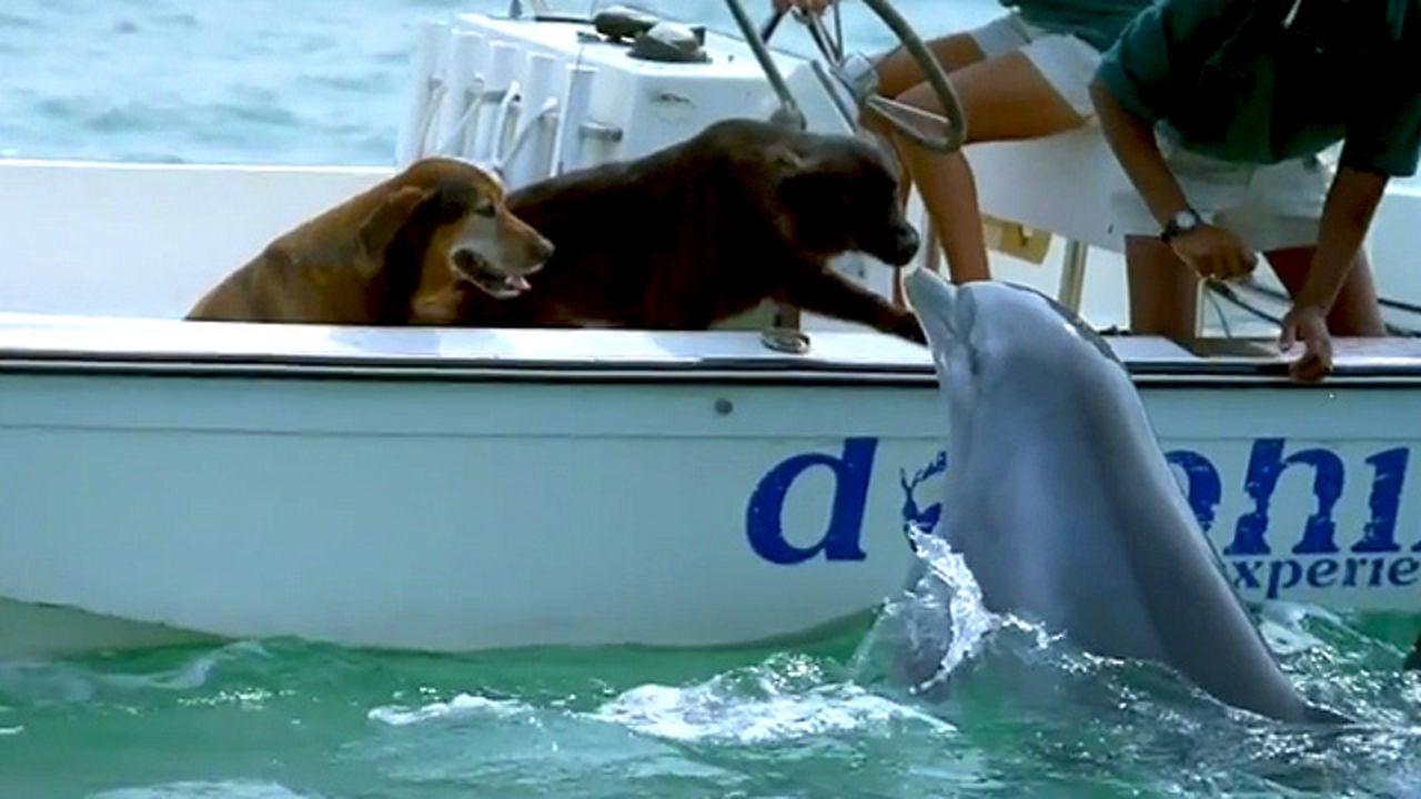 Душевное видео: дельфин выпрыгивает из воды, чтобы поцеловать собаку