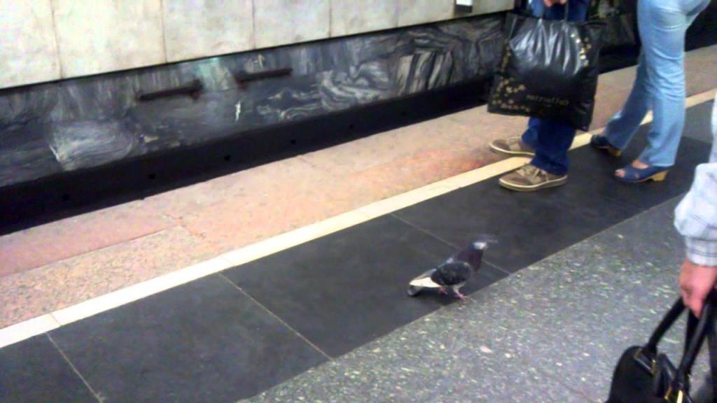 Пассажир получил выплату в размере 28 000 £, потому что он, возможно, поскользнулся на голубином помете