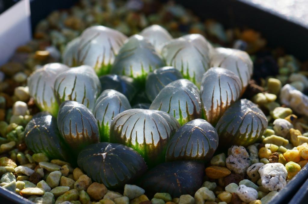 Чудо на подоконнике: 10 завораживающих неприхотливых комнатных растений, о которых мало кто знает