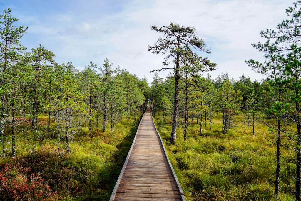 Морской город Пярну, остров Сааремаа, национальный парк Лахемаа: причины, почему стоит посетить Эстонию во время летнего отпуска