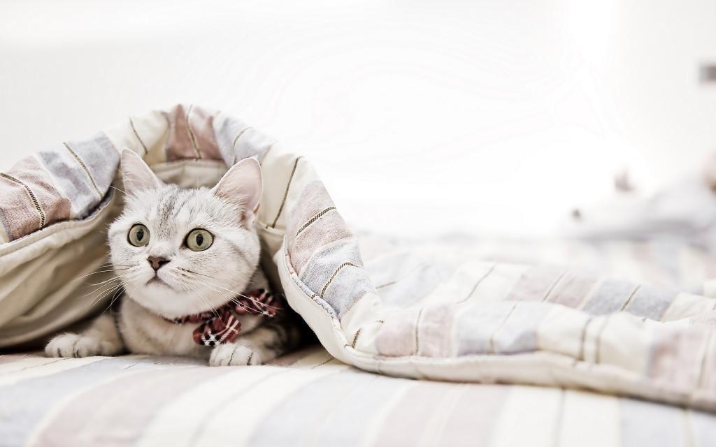 Подруга рассказала, что эфирные масла могут быть опасны для кошек и собак, поэтому я следую нескольким правилам, когда использую их для уборки
