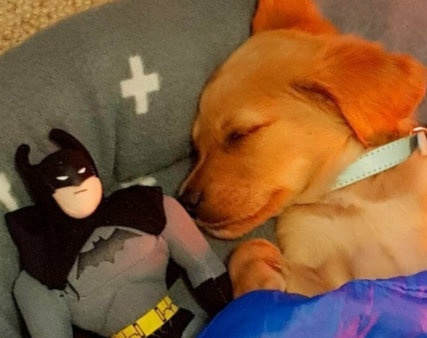 Любителям собак посвящается, или жизненные истории о лучших друзьях человека(39 фото)