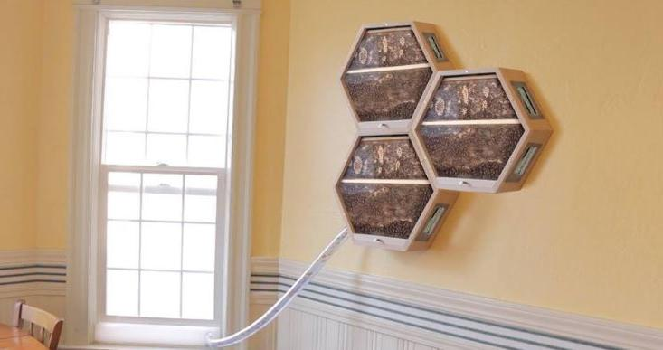 Пчеловодство в гостиной: теперь стало возможным установить безопасные ульи прямо у себя дома