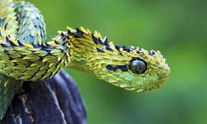 Страшные в своей красоте: экзотические животные, которые попадаются на глаза не всем