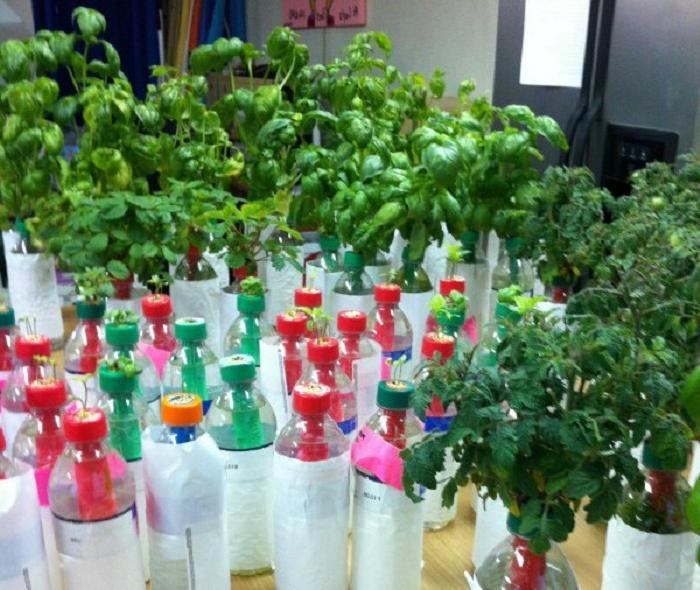 Сосед устроил на балконе огород в бутылках: теперь его семья ест свежие овощи круглый год