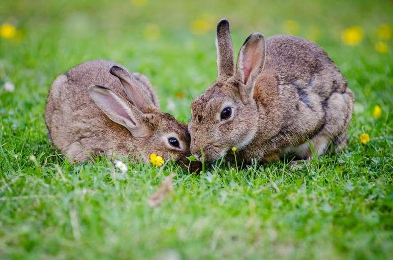 В одном из городов Калифорнии поселились несколько кроликов, и сначала это было мило. Но когда их популяция выросла, жители были неприятно удивлены