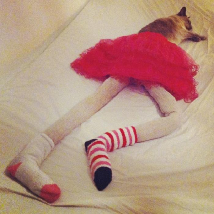 Глупо, но смешно: пользователи поделились фотографиями своих любимых кошек