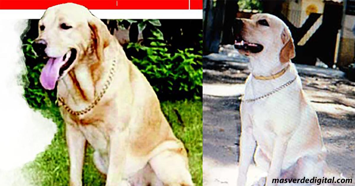 Занджир: собака, которая спасла тысячи жизней при взрывах в Мумбаи в 1993 году