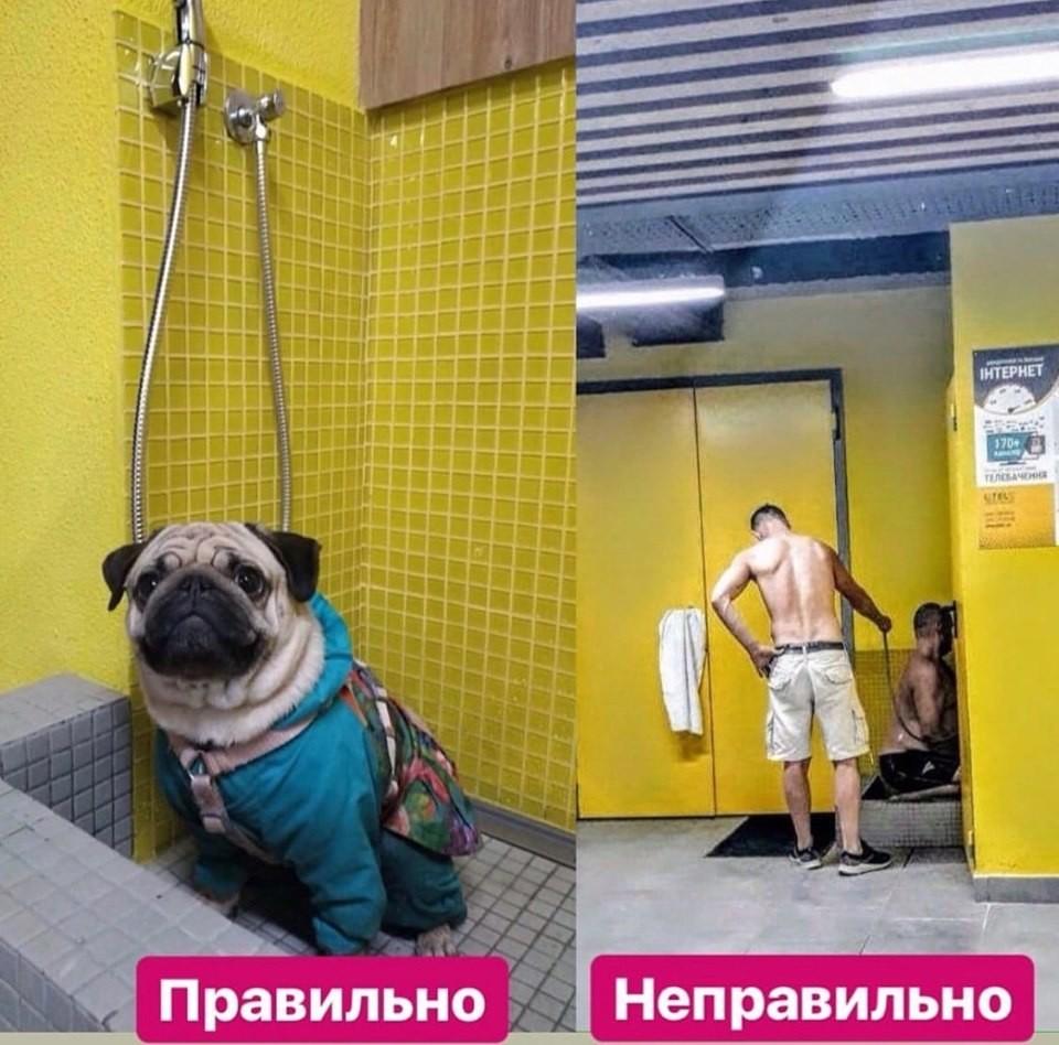 В подъезде киевской многоэтажки поставили душ для собак