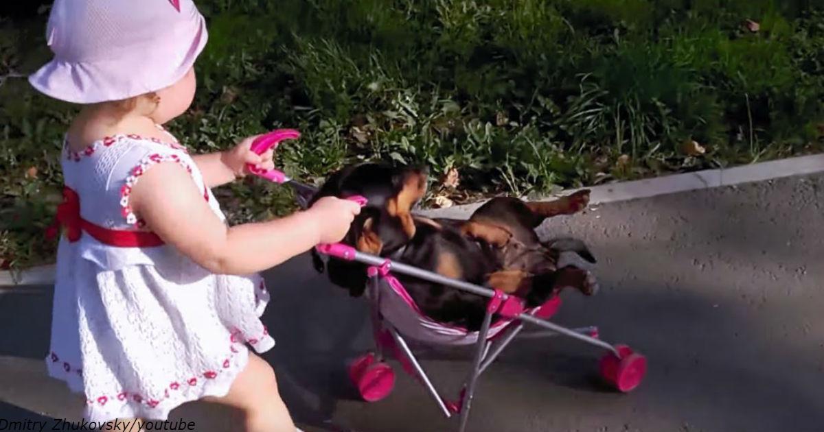 Приехала в гости внучка. Кот сбежал, а вот пес не успел!..