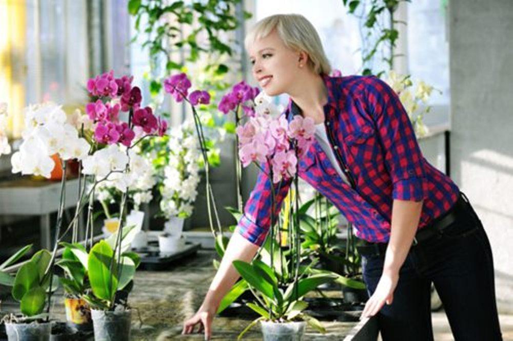 Мистическая орхидея: стоит ли держать в доме красавицу