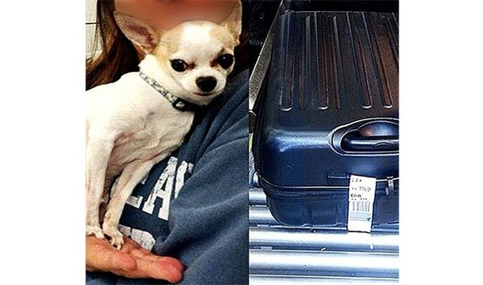 10 странных вещей, изъятых у пассажиров в аэропорту службой безопасности
