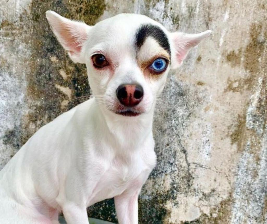 Спасенная собака с необычными глазами разного цвета завоевывает славу в Интернете