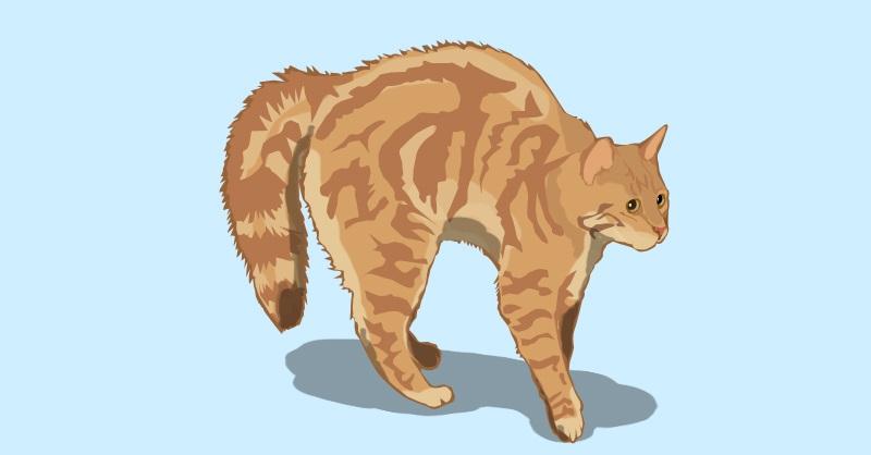 Картинка кошка с выгнутой спиной для детей