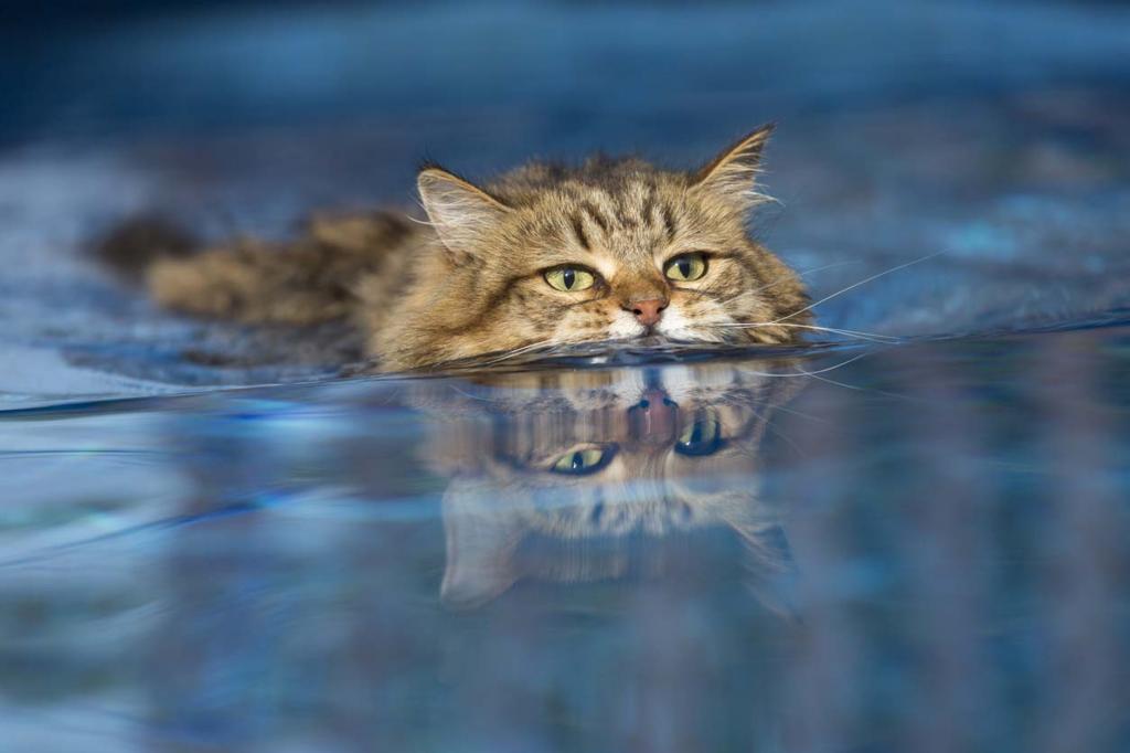 Картинки как кошки плавают