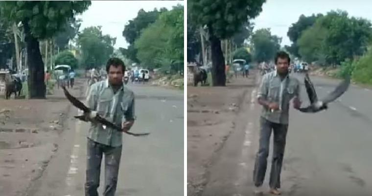 На мужчину каждый день нападают вороны: они ему мстят за то, чего он не совершал