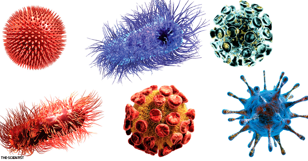 Ученые открыли новое семейство вирусов   и это многое объясняет о наших болезнях