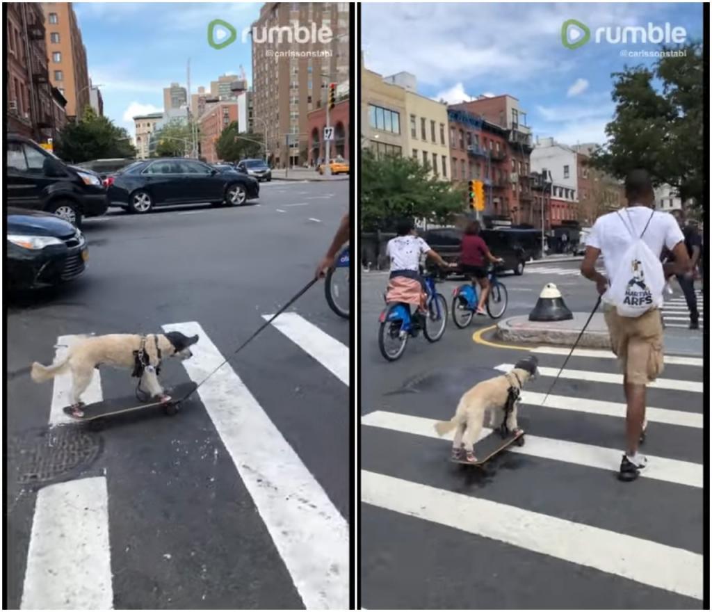 Как нужно выгуливать собаку: например, в Нью-Йорке человек катает своего друга на скейтборде (видео)