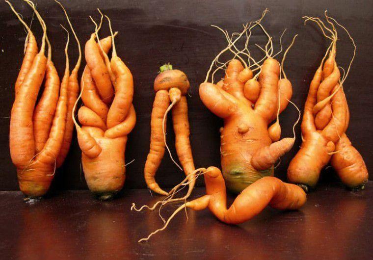 Собрала урожай моркови, а она сплошь корявая и «рогатая». Только теперь я поняла свои ошибки
